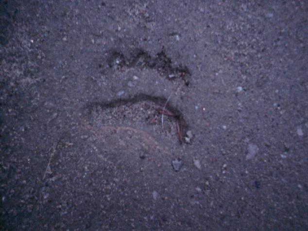 Björnspår