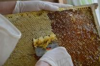 Biodling, en av årets nya sysselsättningar.