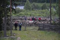 Yttersel vid Ängesån, här samlas Ängeså skogssameby.