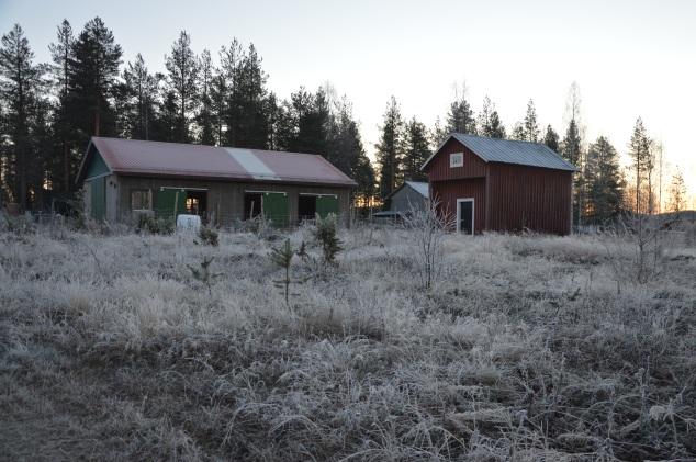 Fårhuset, varje gång jag ser det känns det skönt att inte hålla på att bygga denna vinter. Förra året vi denna tid var jag i full gång med bygget. Kallt och snö.